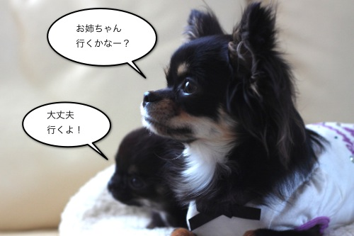 ichi_5083.jpg