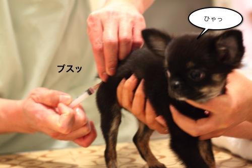 ichi_5213.jpg