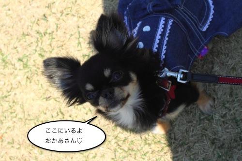 ichi_5665.jpg