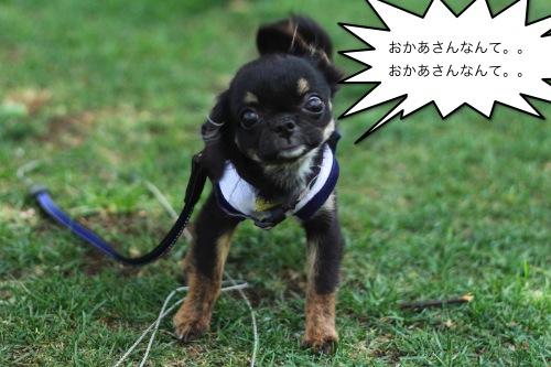 ichi_67092.jpg