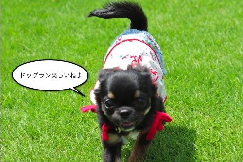 ichi_7141.jpg