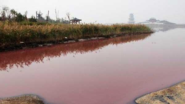 中国の水不足、「南水北調 ...
