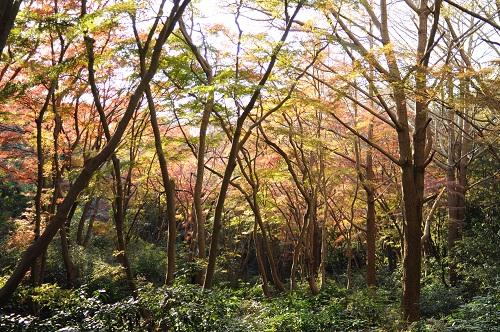 FOTOLOGUE_NOHOHON_MNM_2012_01_08_2.jpg