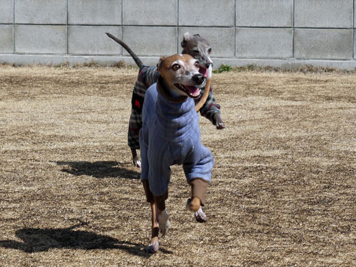 走るモンク