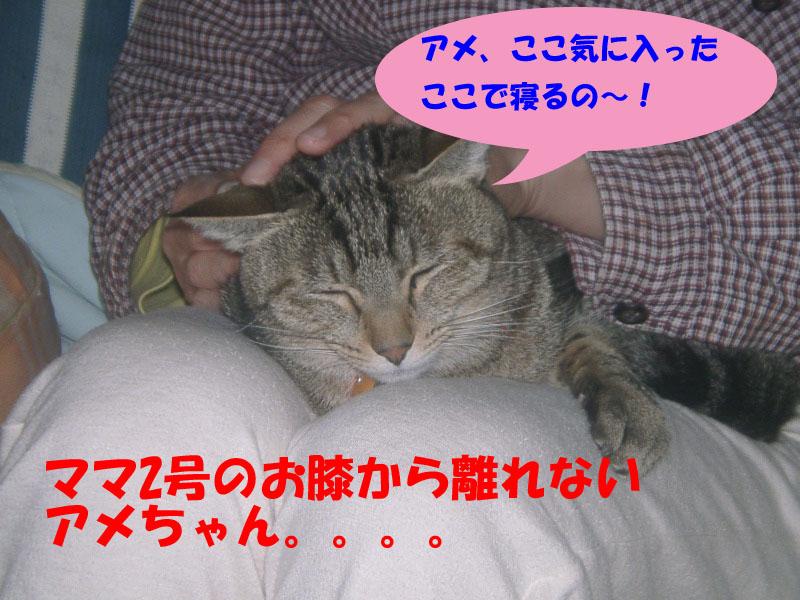 アメ寒い3