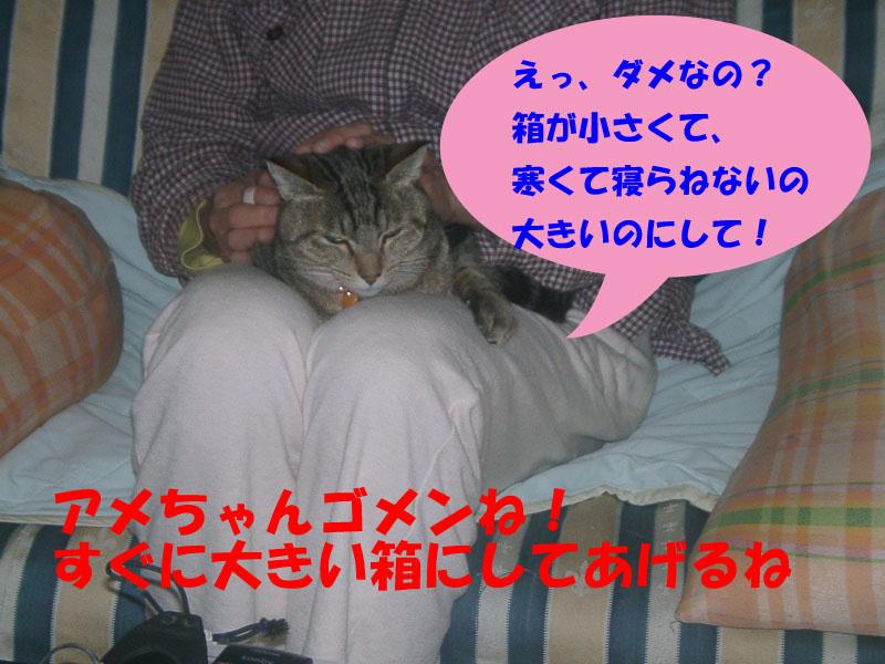アメ寒い4