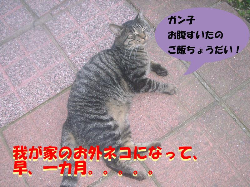 ガンコちゃん1