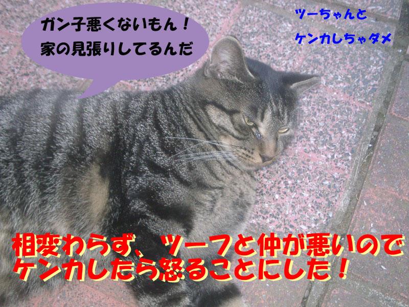 ガンコちゃん2