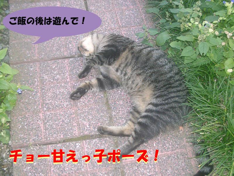 ガンコちゃん3