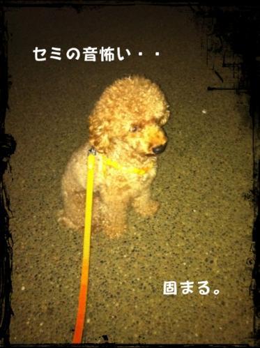 散歩にて。