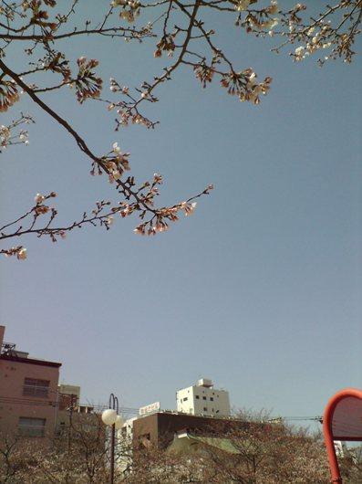 山王公園2010春③