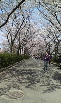 花畑園芸公園の桜並木