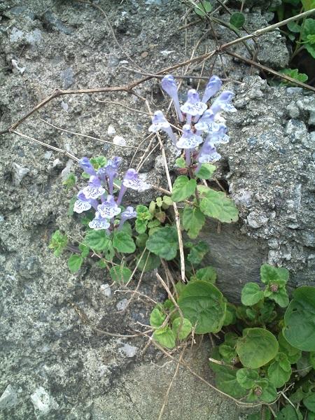 田舎の山道の花