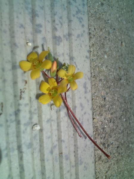 あっちゃんからの初めての花☆