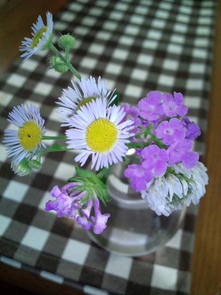 ちぃからの花①
