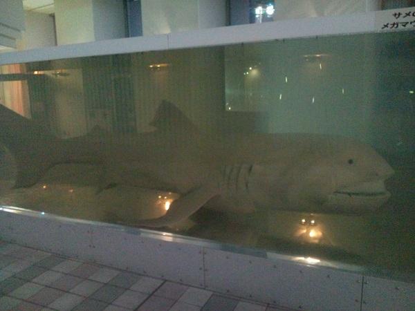 夜の水族館②