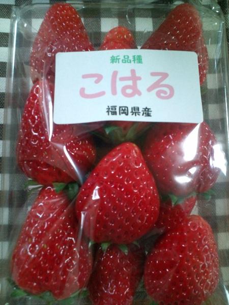 新種イチゴ・こはる