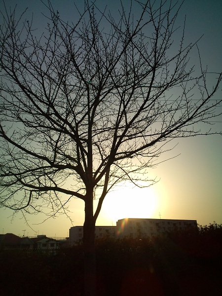 2010冬・黄昏