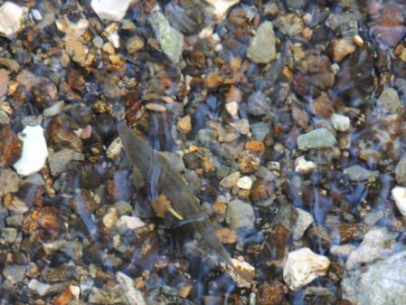 0677水中の魚