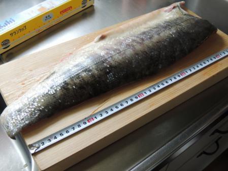 N0689秋鮭