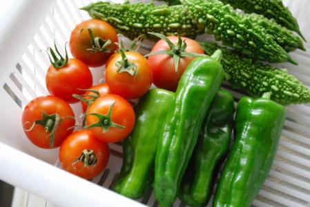 7484庭野菜