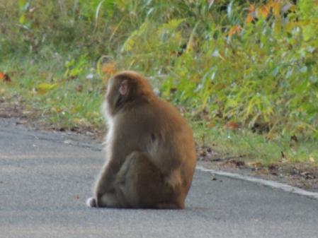 N0759野猿