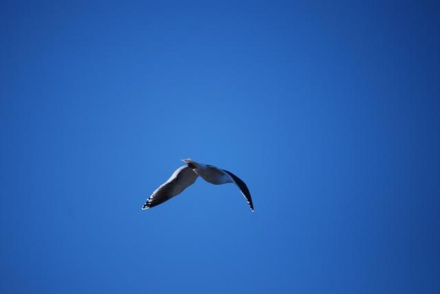 7733カモメと青い空