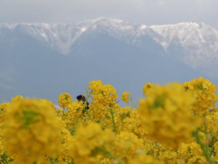 N1701山は雪
