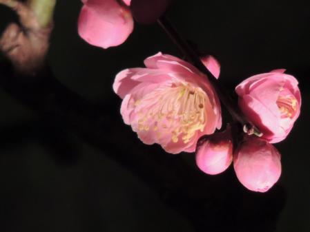 N1729夜に咲く