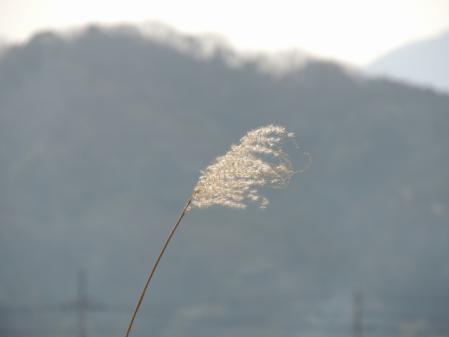 N1932春の風吹く