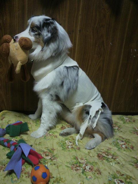 ピスケ服帯とおもちゃ