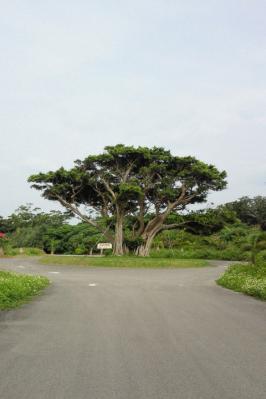 mangrob_031.jpg