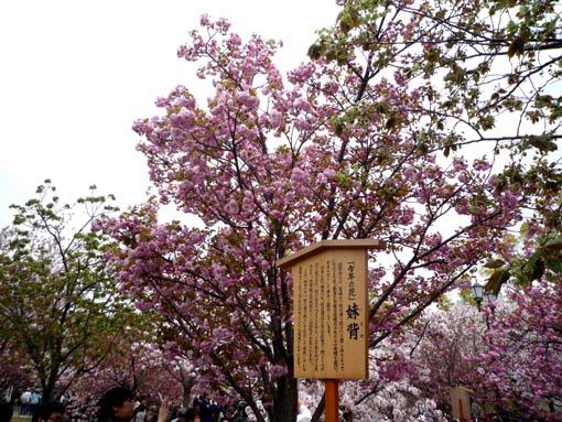 11zoheikyoku2.jpg