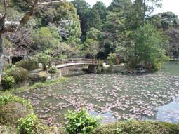oharano4.jpg