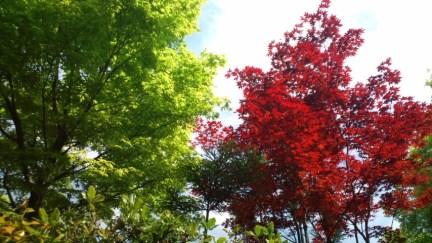 008 紅葉がすごく綺麗