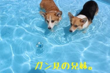 泳げばいいじゃん。