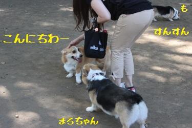 小金井公園来たよ♪