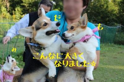 ダーター&萌香