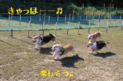 みんなで走ると楽しいね。