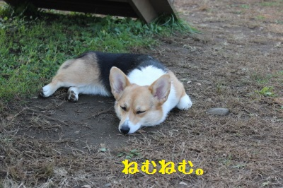 疲れたでちゅ・・・