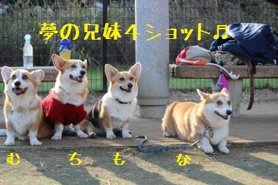 ルーっ子4兄妹