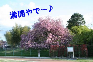 201004161
