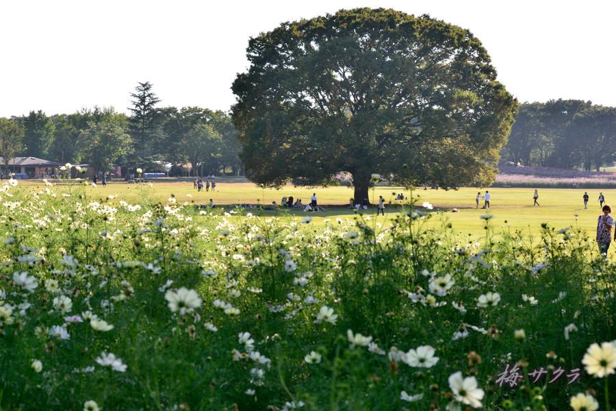 昭和記念公園2(10)変更済