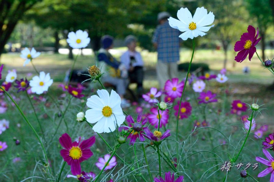 昭和記念公園2(4)変更済