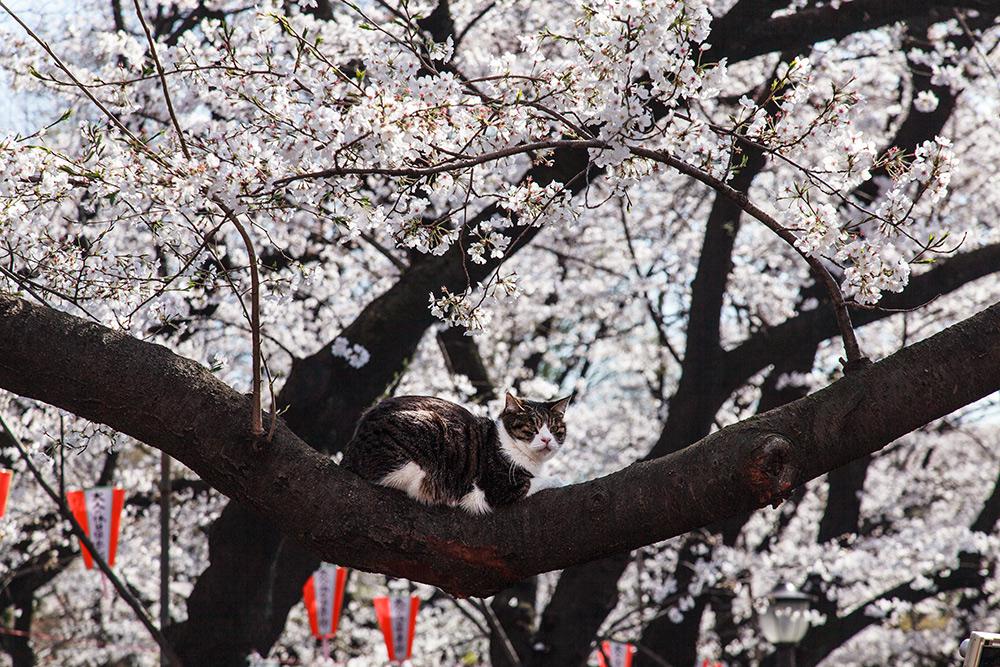 130322上野公園01