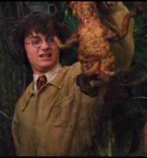 Harry_with_Mandrake.jpg