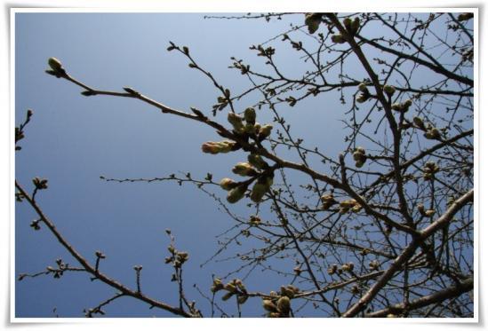 春近し。。。