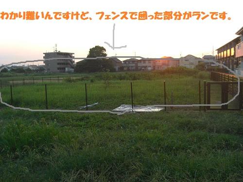 CIMG0408.jpg
