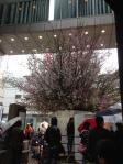 ルミネ有楽町の桜_120324