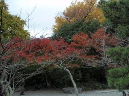 鎌倉紅葉_081129
